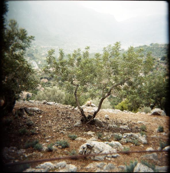 Mallorca-5