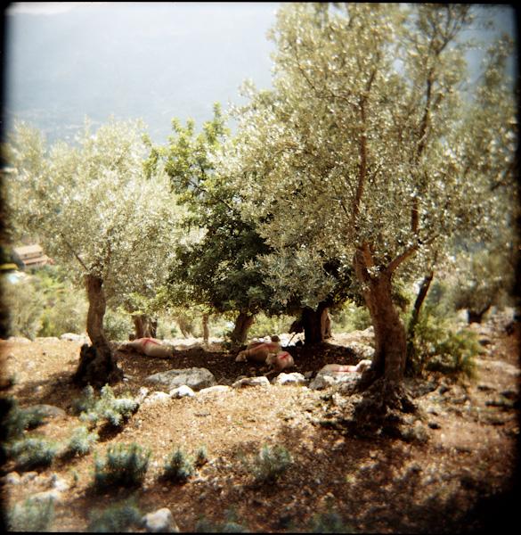 Mallorca-8